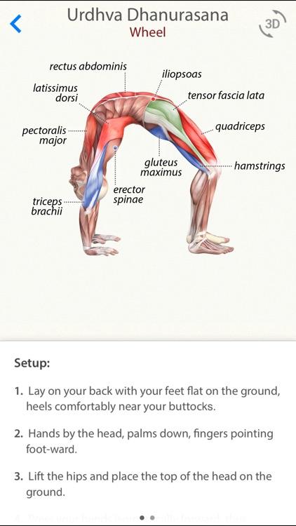 3D Yoga Anatomy Lite screenshot-0