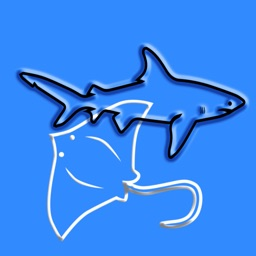 Sharks & Rays, by Reef Life