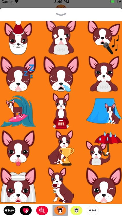 Red Boston Terrier screenshot-3