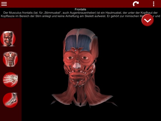 "Muscular System 3D (Anatomie)"" im App Store"