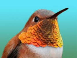 38 Retina Hummingbird stickers for iMessage