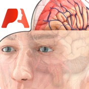 Pocket Brain - Neuroanatomie Intéractive