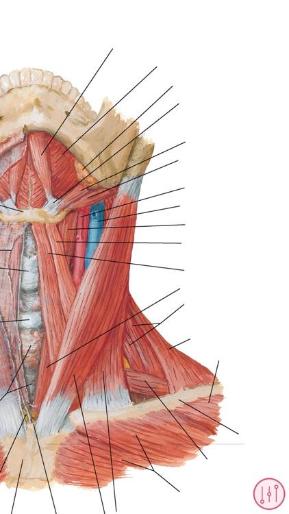 Netter\'s Anatomy Atlas: Bundle by Skyscape Medpresso Inc