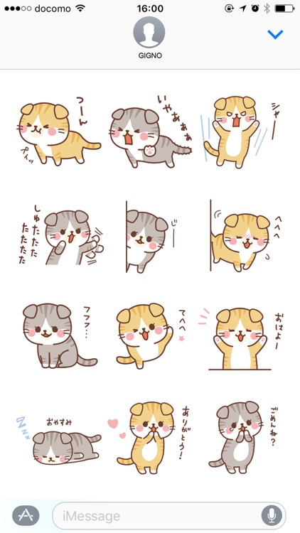 Fluffy Scottish Fold