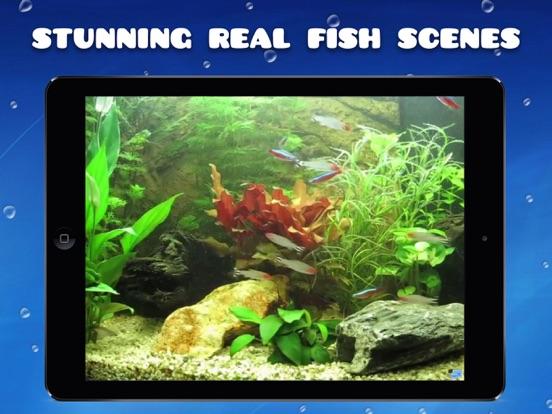 Aquarium HD : Tropical and Marine Fish Tank Scenes screenshot
