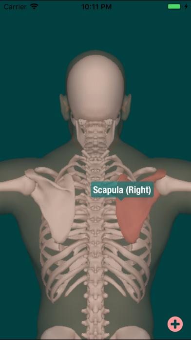 Skeleton Map 3D