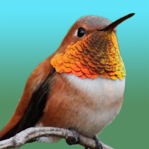 Hummingbird Sticker Pack