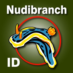 Nudibranch ID Australia New Zealand