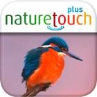 Identify live bird songs icon