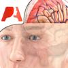 Pocket Brain-インタラクティブ神経解剖学