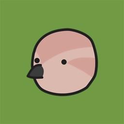Birds of Play–Animated!