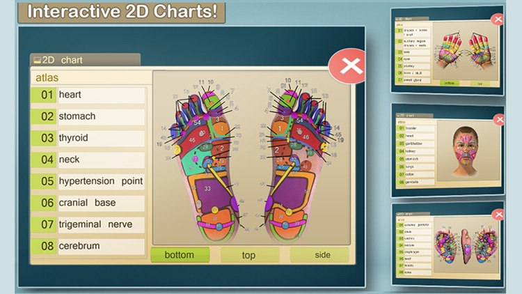 Total Reflexology-3D screenshot-0
