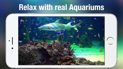 Aquarium Live HD + - by Voros Innovation & Business Services Pty Ltd -  Entertainment Category - 21 Features & 257 Reviews - AppGrooves: Discover  Best
