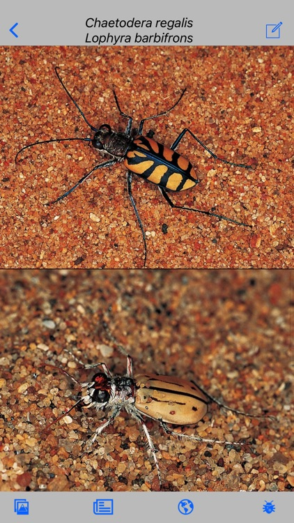 Insects of South Africa screenshot-4