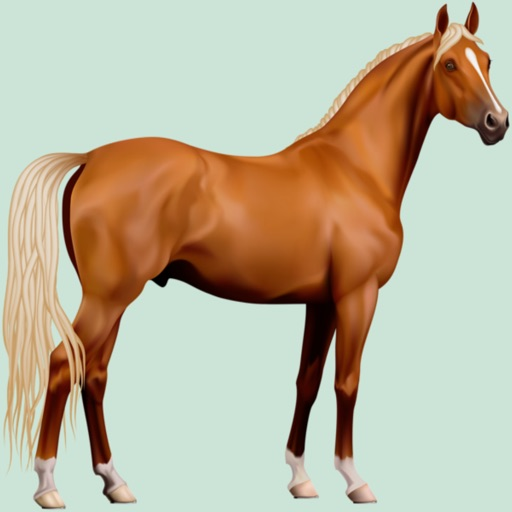 Horse Breeds Quizzes icon