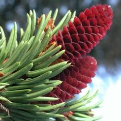 iForest - Bäume und Sträucher