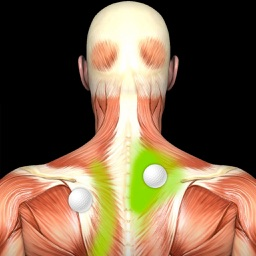 Muscle Trigger Points: Guide & Reference