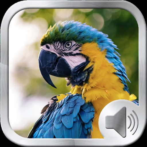 Birds Sounds and Music