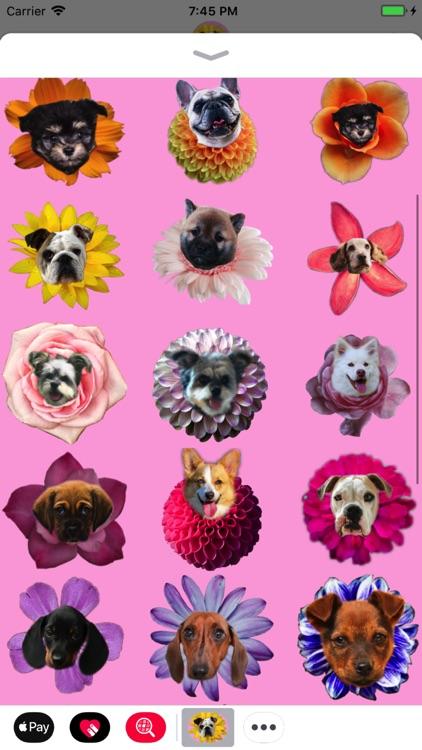 Puppy Bouquet