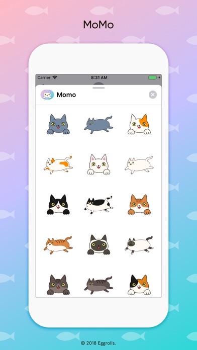 Momo fluffy cats