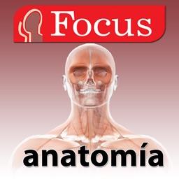 Junior Anatomía