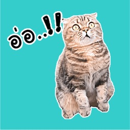 Oh My Cat Animated Stickers