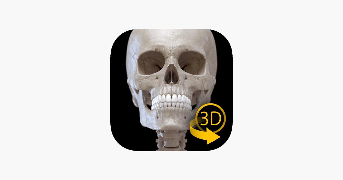 Skelett 3D Anatomie im App Store