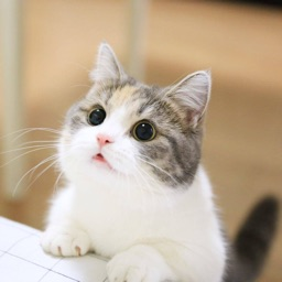 Cat Wallpapers Collection