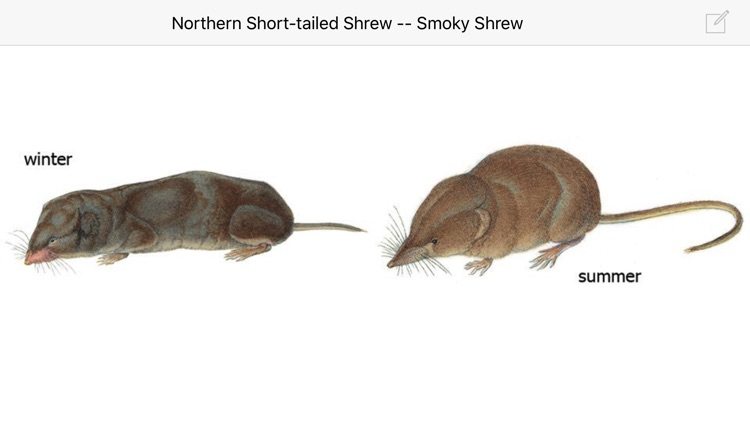 Mammals of North America LITE screenshot-4