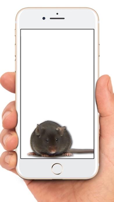 Maus auf dem Bildschirm WitzScreenshot von 1
