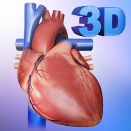 My Heart Anatomy