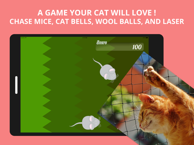 Best Game for Cats, game for IOS