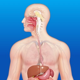 3D人体解剖-人体肌肉|骨骼解剖图谱教学
