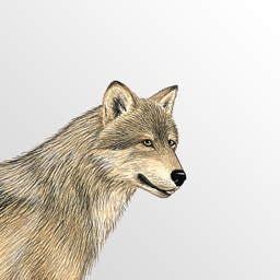 Mammals of North America