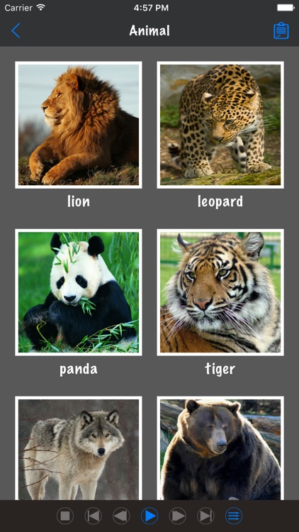 Learn English Basic Word
