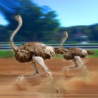 Ostrich Racing 3D Simulator icon