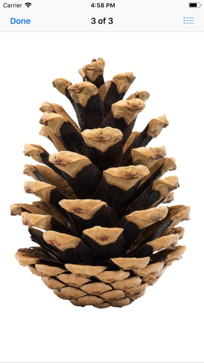 Pine Cone Stickers screenshot-3