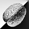 Brain Equalizer