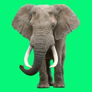 Animal Sounds Voice Simulator