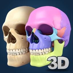 My Skull Anatomy