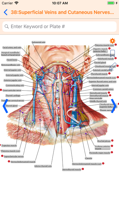 Netter's Anatomy Atlas 7e Screenshot