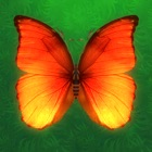 Pop Butterfly icon
