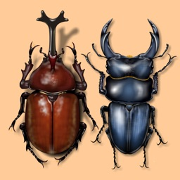 Japanese Cult Beetles