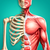 Discover Human Body AR