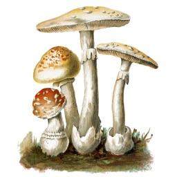 MushroomLog