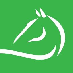 The Equestrian - #1 Horse Care