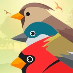 birds birdcall