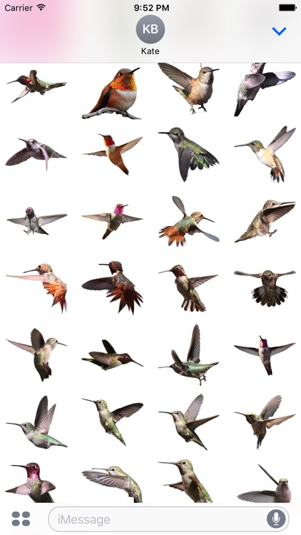 Hummingbird Sticker Pack