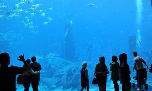 Aquarium & Relax