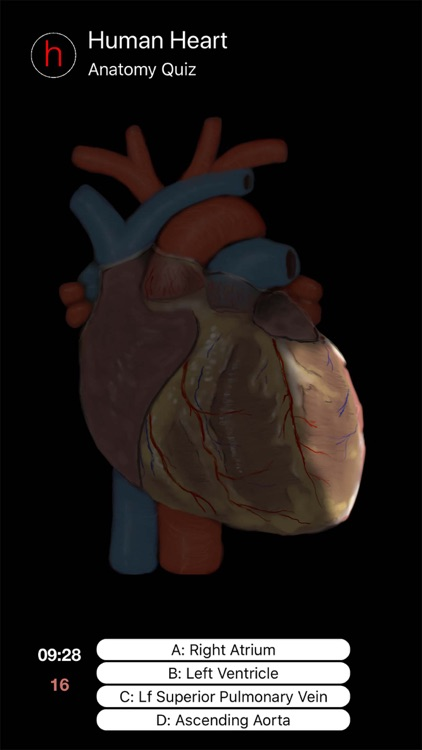 Human Heart Anatomy Quiz
